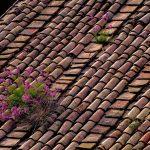 Husets tak behöver omvårdnad